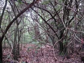 bosque-de-aguirre34