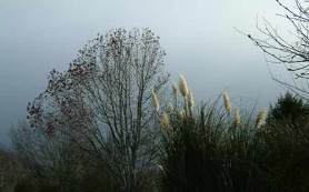 winter-pampas