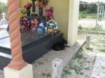 perro sato en tumba