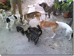 perros y gatos3