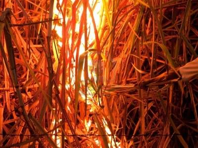 cañaveral en fuego 2