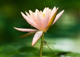 libélula en flor
