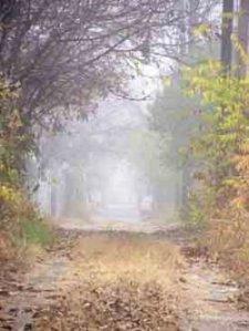 neblina3