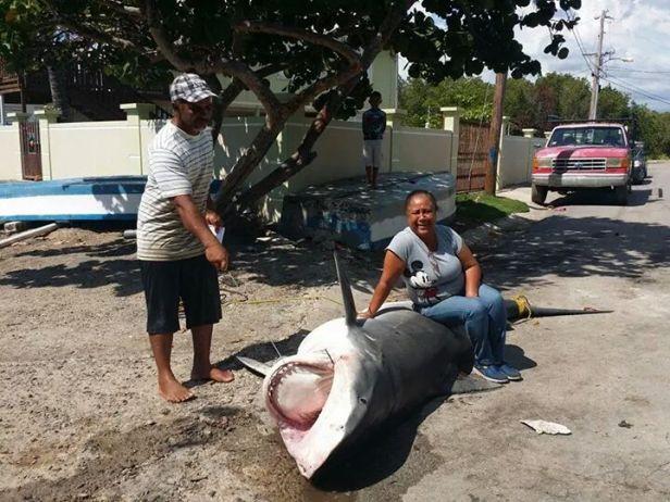 Pesca de tiburon en Las Mareas 2014