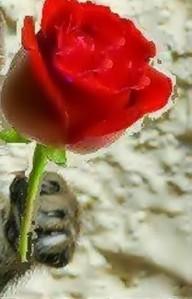 gato flor (2)