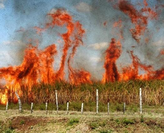 quema-cultivos-cana (2)